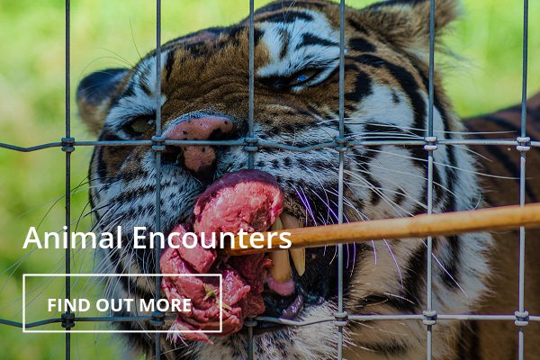 Woodside Wildlife Park - Animal Encounters