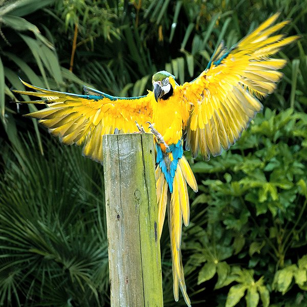 Blue and Gold Macaw - Tropical birds and birds of prey at Woodside Wildlife Park
