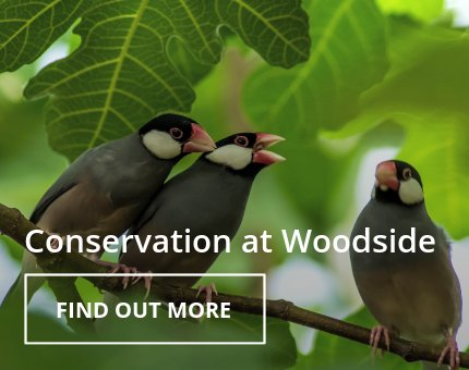 Wildlife Conservation at Woodside Wildlife Park