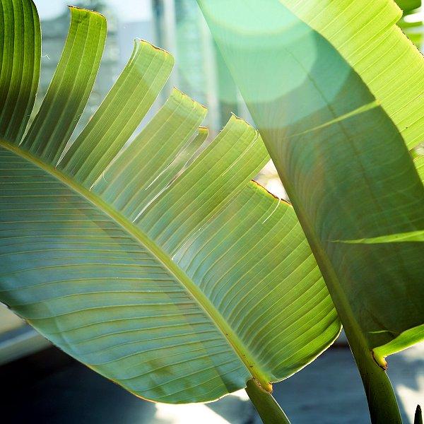 Plants at Woodside Wildlife Park - Banana