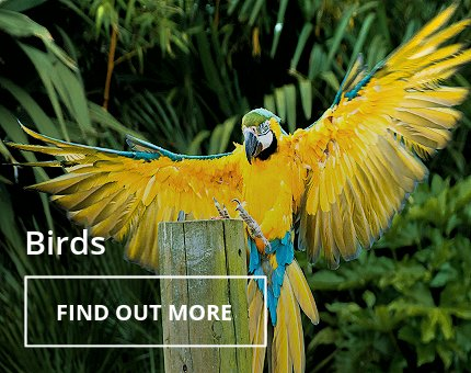 Animals and Plants - Tropical birds at Woodside Wildlife Park