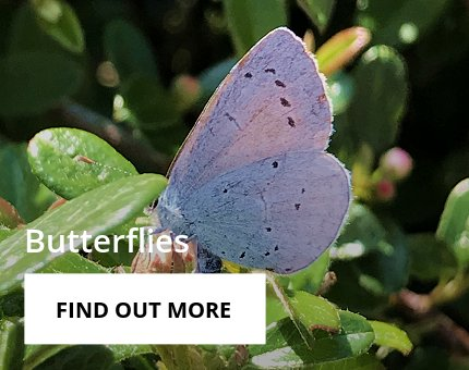 Animals and Plants - Tropical butterflies at Woodside Wildlife Park