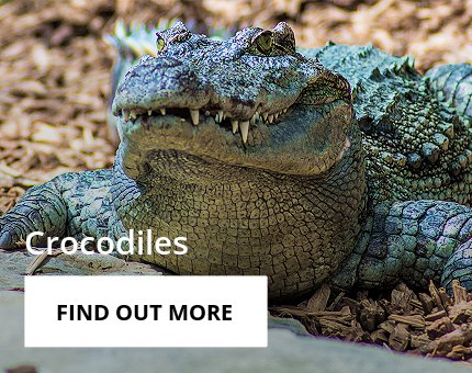 Animals and Plants - Siamese crocodile at Woodside Wildlife Park