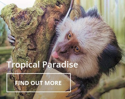 Animals and Plants - Tropical Paradise at Woodside Wildlife Park
