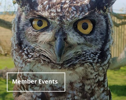 Events at Woodside Wildlife Park - Member Events