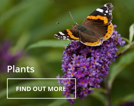 Animals and Plants - Plants at Woodside Wildlife Park
