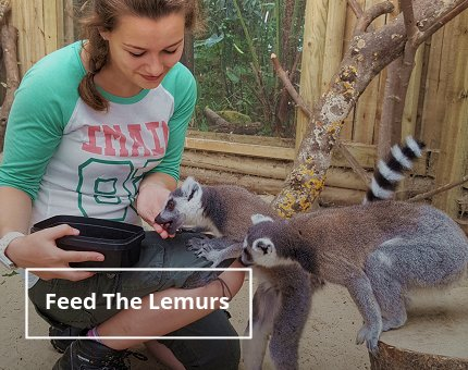 Animal Encounters - Feed the Lemurs