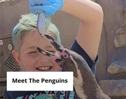Animal Encounters - Feed the Penguins