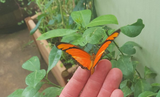 Endeavour Build at Woodside Wildlife Park - Butterfly House